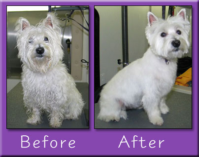 dog grooming in Des Moines
